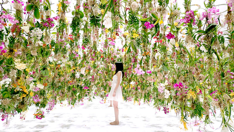 The Floating Garden in Japan Where Flowers Move Skyward as you Approach
