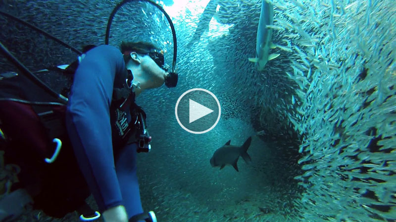 Going-Swimming-with-a-Million-Fish-gopro