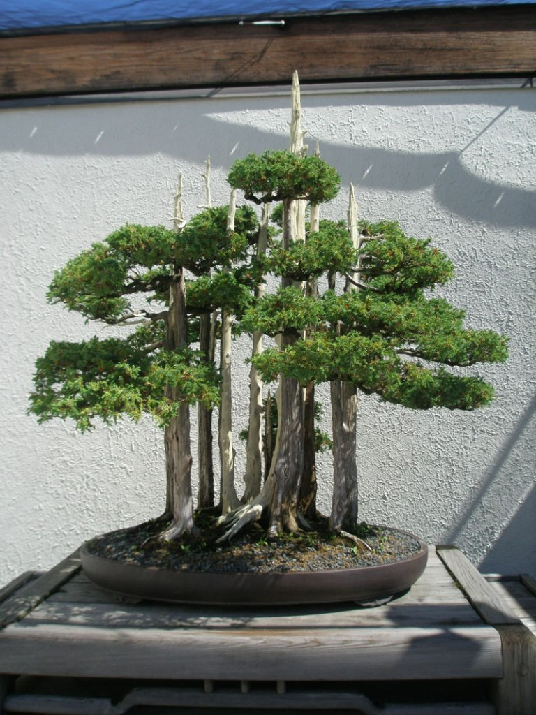 goshin by john naka bonsai forest for grandchildren (1)