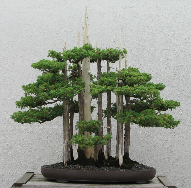 goshin by john naka bonsai forest for grandchildren (2)