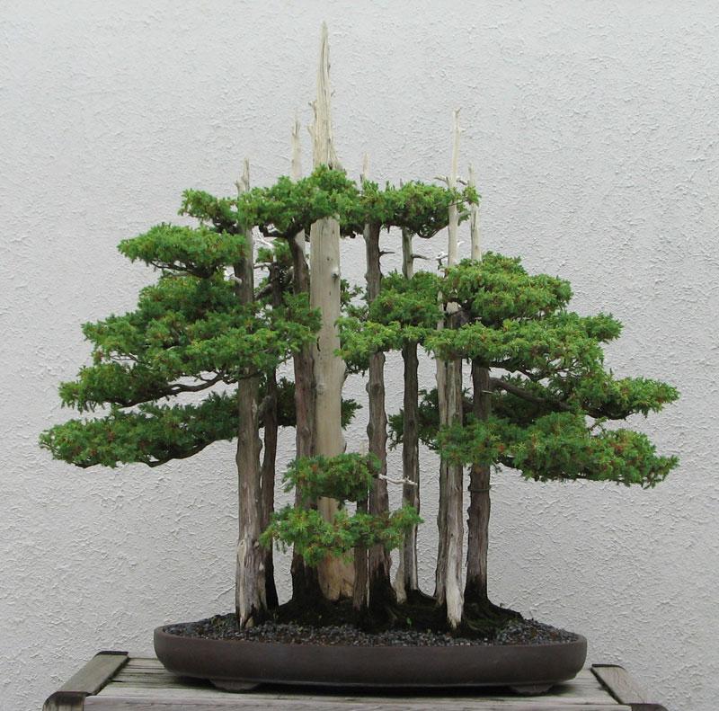 goshin by john naka bonsai forest for grandchildren (2)