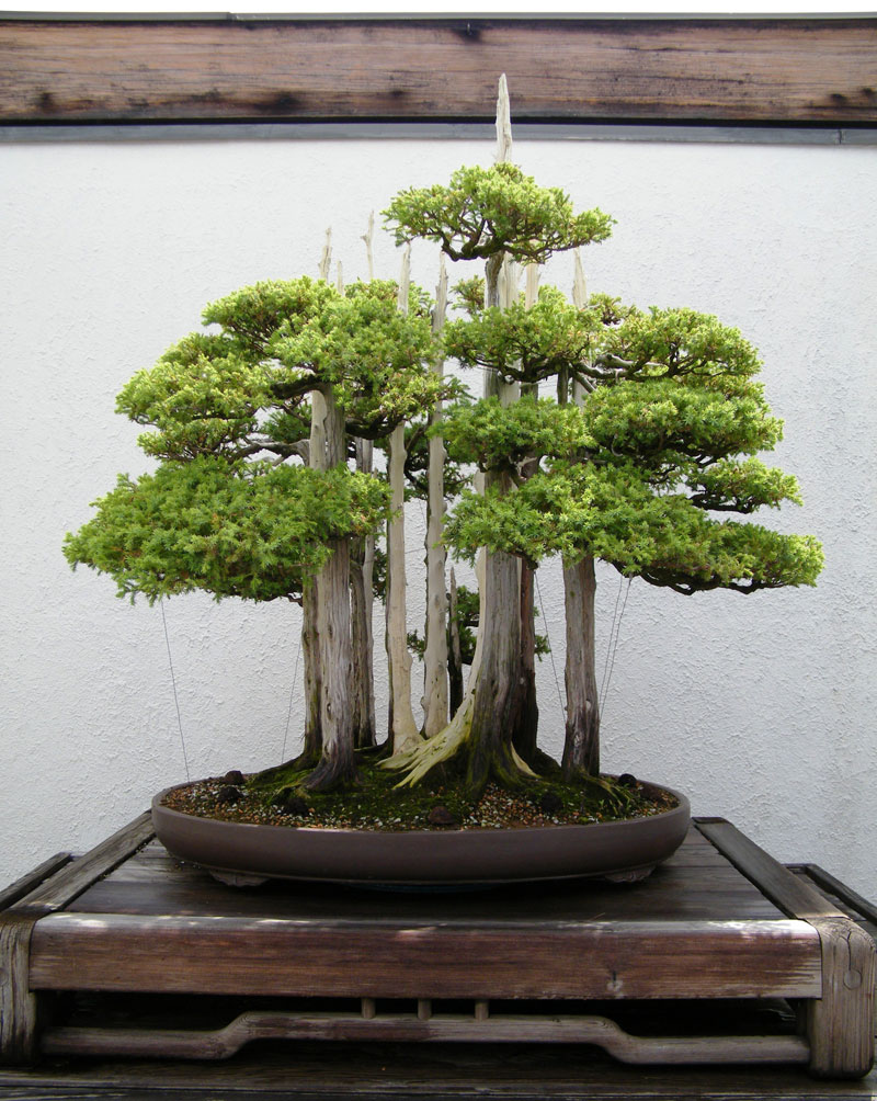 goshin by john naka bonsai forest for grandchildren (4)