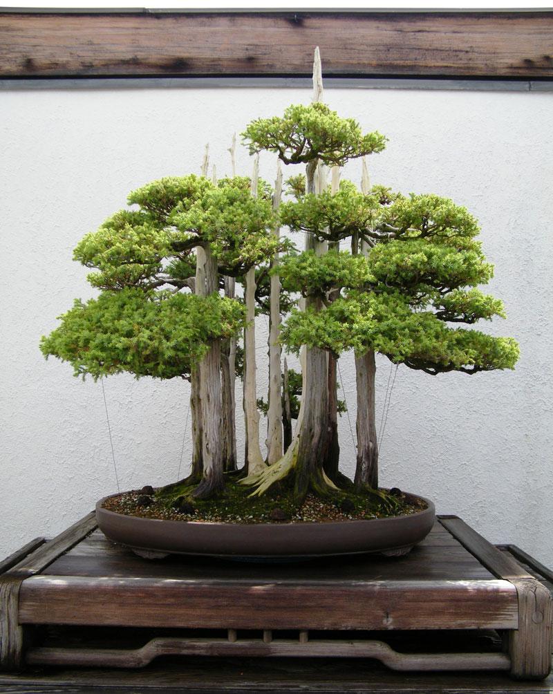 goshin by john naka bonsai forest for grandchildren (4)