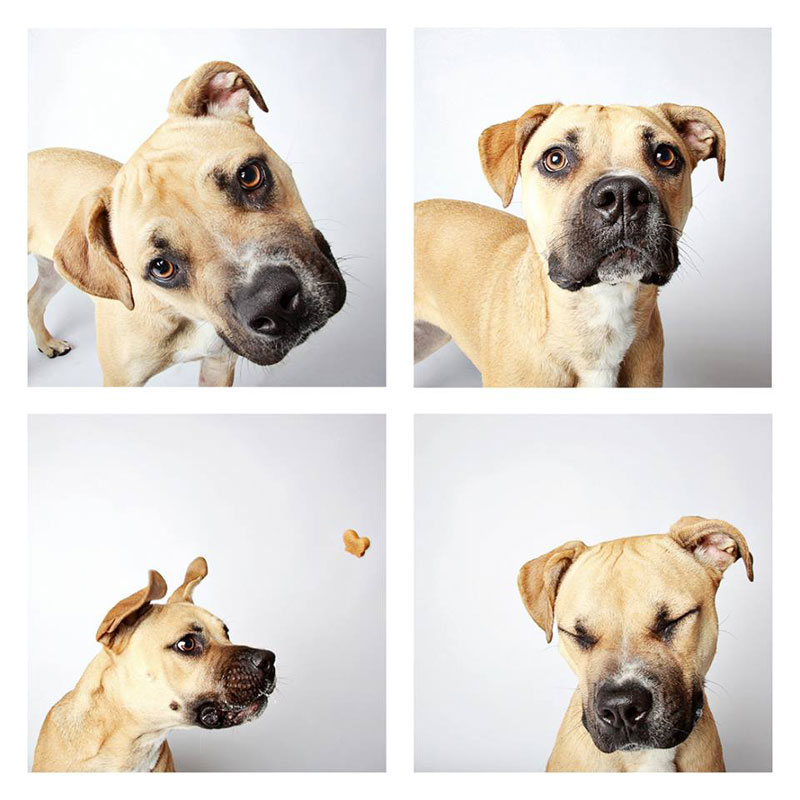 humane society of utah photo booth dog pics to increase adoption (10)