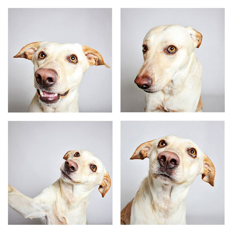 humane society of utah photo booth dog pics to increase adoption (21)