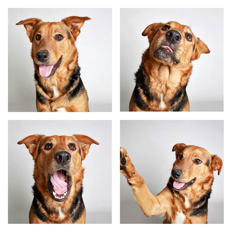 humane society of utah photo booth dog pics to increase adoption (25)