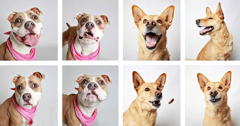 This Photographer Does Photo Booths for Dogs to Increase Adoption and It'sWorking