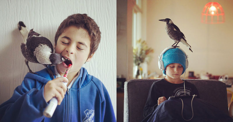 penguin the magpie on instagram by cameron bloom (5)