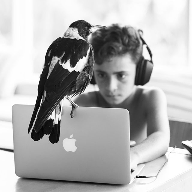 penguin the magpie on instagram by cameron bloom (8)
