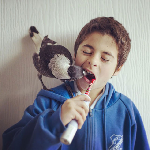 penguin the magpie on instagram by cameron bloom (9)