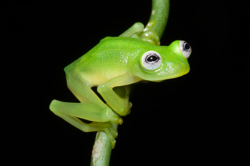 real life kermit the frog discovered The Top 50 Pictures of the Day for 2015