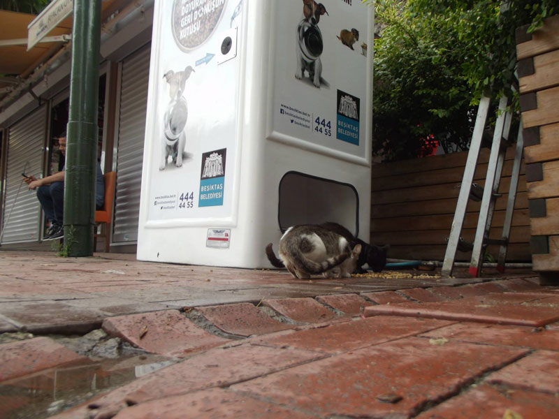 Vending Machine Feeds Stray Animals in Exchange for Recycled Bottles (4)