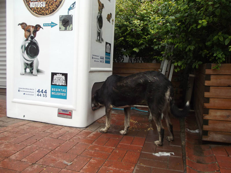 Vending Machine Feeds Stray Animals in Exchange for Recycled Bottles (7)