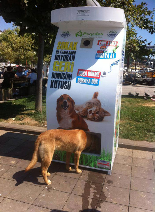 Vending Machine Feeds Stray Animals in Exchange for Recycled Bottles (8)