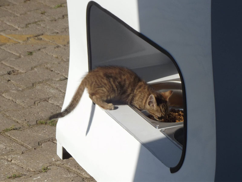 Vending Machine Feeds Stray Animals in Exchange for Recycled Bottles (9)