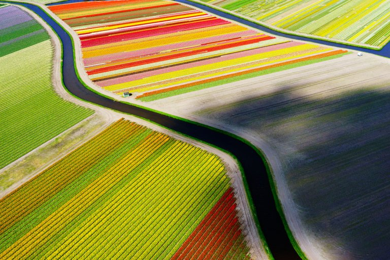 A Bird´s View of Tulip Fields