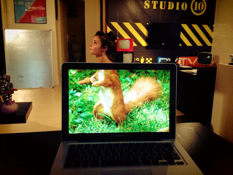 Coworkers-Add-their-Heads-to-Animals-on-Desktop Backgrounds (10)