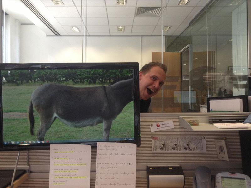 Coworkers-Add-their-Heads-to-Animals-on-Desktop Backgrounds (20)