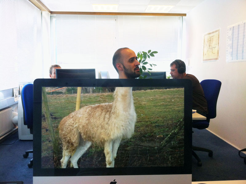 Coworkers-Add-their-Heads-to-Animals-on-Desktop Backgrounds (7)