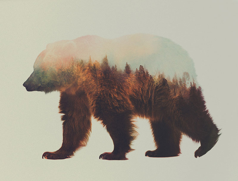 double exposure animal portraits by andreas lie (12)