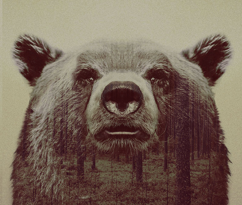 double exposure animal portraits by andreas lie (3)