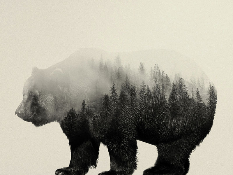 double exposure animal portraits by andreas lie (4)
