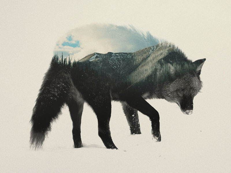 double exposure animal portraits by andreas lie (5)