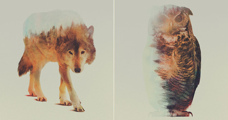 Double Exposure Portraits of Animals Reflecting Their Habitat