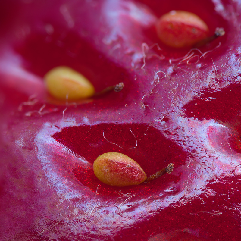 extreme close up of a strawberry Picture of the Day: The Surface of a Strawberry