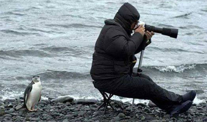 penguin cameraman funny The Shirk Report   Volume 318