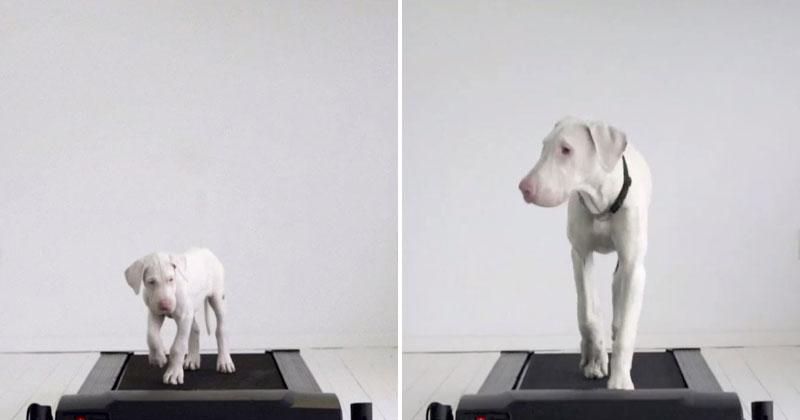 Doggy Treadmill Timelapse