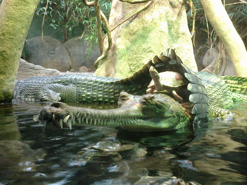 turtle riding crocodile1 The Top 100 Pictures of the Day for 2015