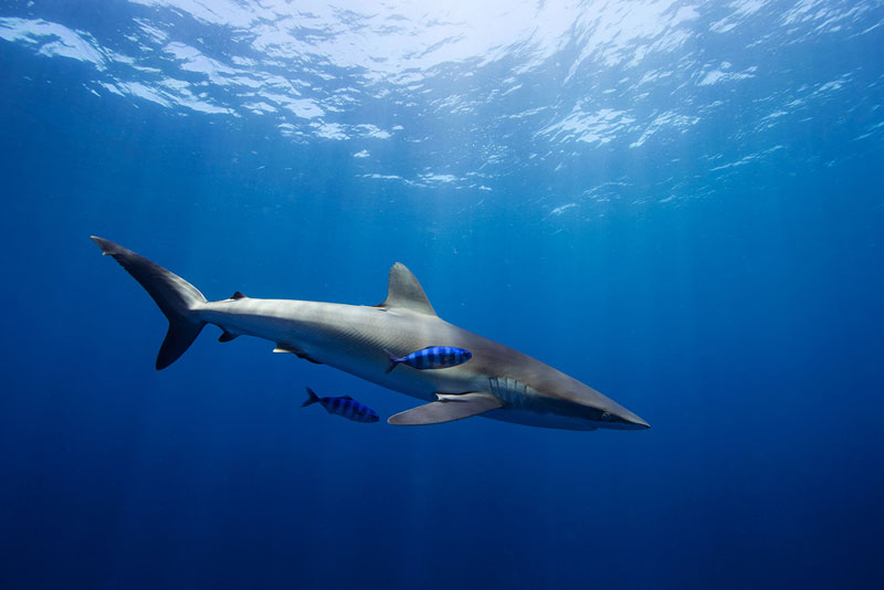 Underwater Animal Photography by Jorge Cervera Hauser (10)