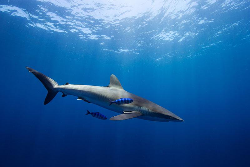 Underwater Animal Photography by Jorge Cervera Hauser (10)