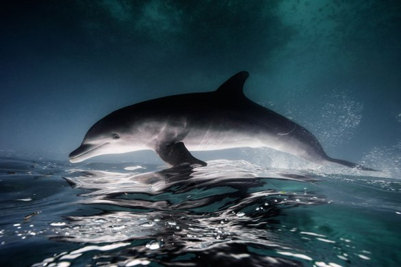 Underwater Animal Photography by Jorge Cervera Hauser (12)