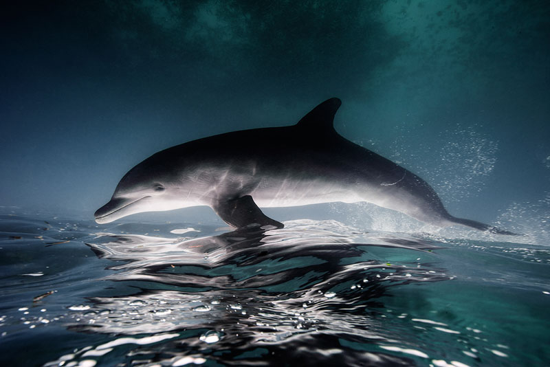 Underwater Animal Photography by Jorge Cervera Hauser (12)