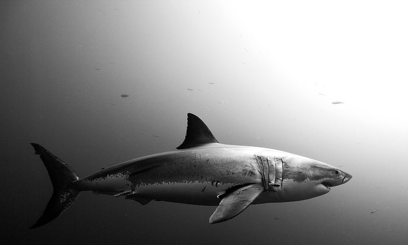 Underwater Animal Photography by Jorge Cervera Hauser (14)