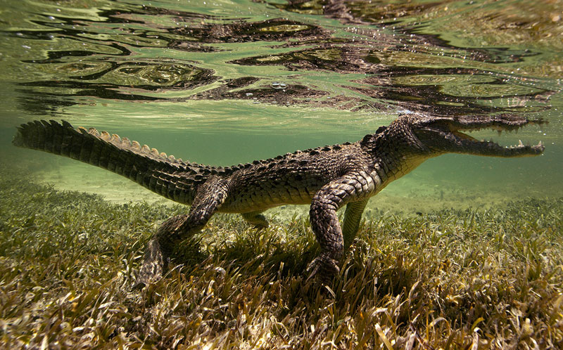 Underwater Animal Photography by Jorge Cervera Hauser (4)