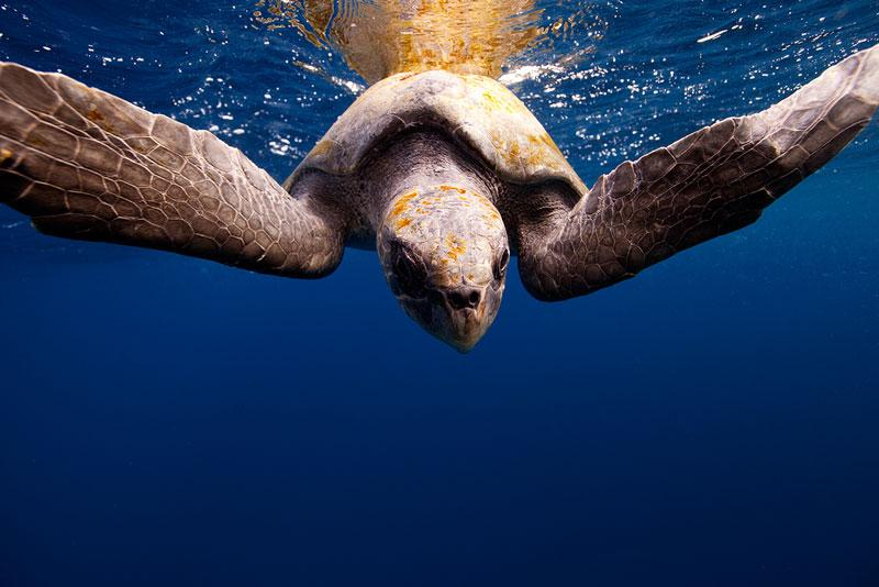 Underwater Animal Photography by Jorge Cervera Hauser (6)
