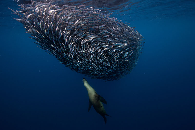 Underwater Animal Photography by Jorge Cervera Hauser (7)