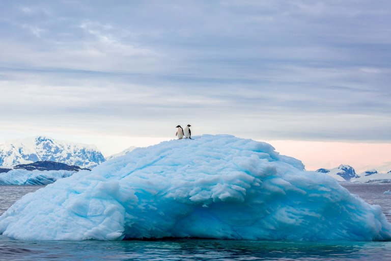 Adelie Penguins At Antarctic Peninsula
