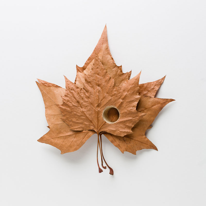 3d leaf crochet by susanna bauer (13)