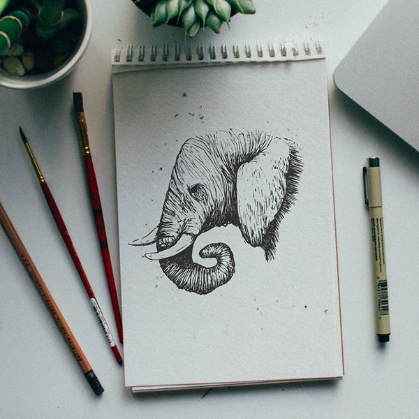 Artists Challenge Each Other to a Daily Animal Alphabet Drawing Duel (2)