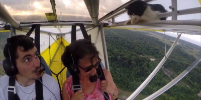 Chill Cat Sneaks Onto Wing of Glider Plane After Pilot's Pre-FlightCheck