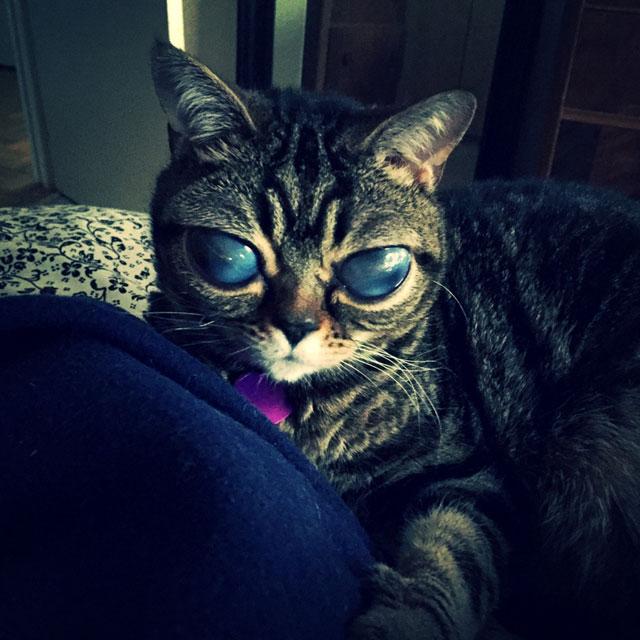cat with huge eyes alien cat matilda (10)