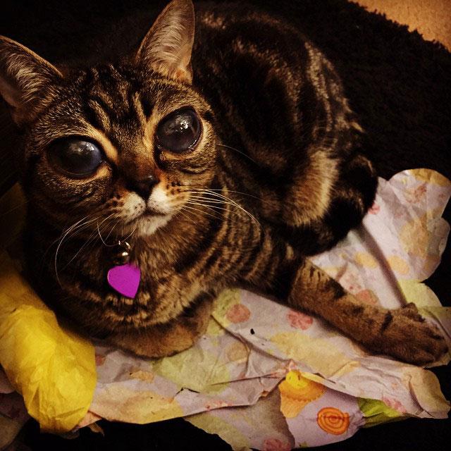 cat with huge eyes alien cat matilda (2)