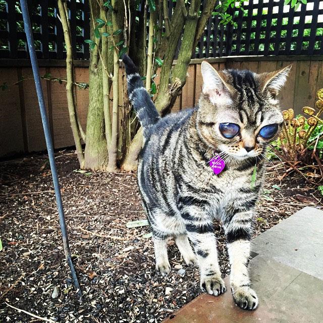 cat with huge eyes alien cat matilda (3)