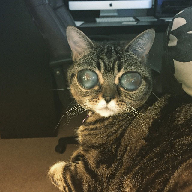 Matilda The Cat With Alien Eyes