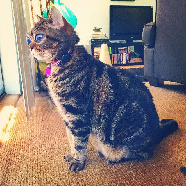 cat with huge eyes alien cat matilda (6)