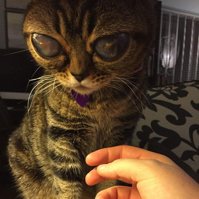 cat with huge eyes alien cat matilda (7)